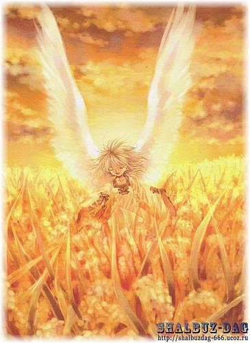 припев весна белые крылья