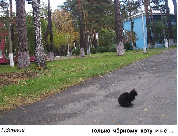 Только чёрному коту и не...