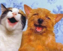 котики улыбаются