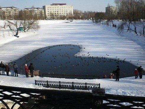 Накормите птиц.