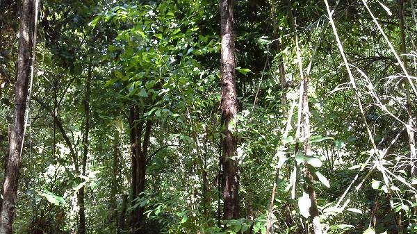 Другой лес.jpg